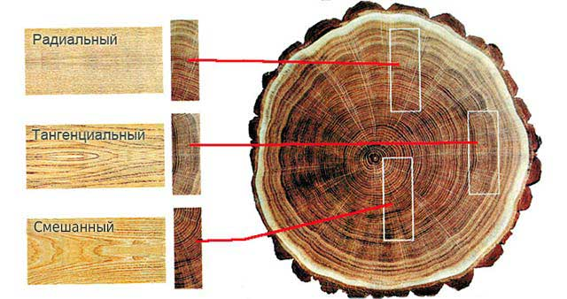 срез дерева